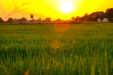 Selective focus on green field with soft sunset lighting.