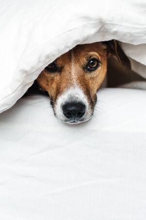 Photo pour The dog on the bed. - image libre de droit