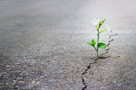 Foto de white flower growing on crack street, soft focus, blank text - Imagen libre de derechos