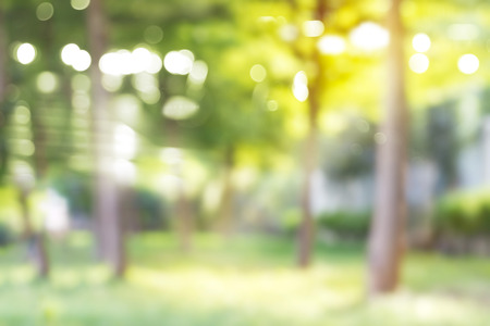 Photo pour Blurred park, vibrant green natural background - image libre de droit