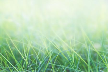 Photo pour grass and natural green background with selective focus - image libre de droit