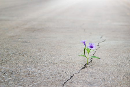 Foto de purple flower growing on crack street, soft focus, blank text - Imagen libre de derechos