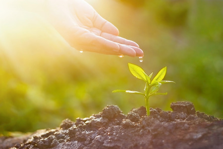 Hand nurturing and watering young plant on sunshine nature background, Vintage color tone, New Life concept