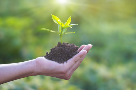 Photo for Human hand holding young plant with soil on nature background, Ecology, Investment, CSR, New Life concept - Royalty Free Image