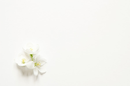 Flowers composition. Pattern made white and pink flowers with space for text on white paper. Mockup. View from above. - Image