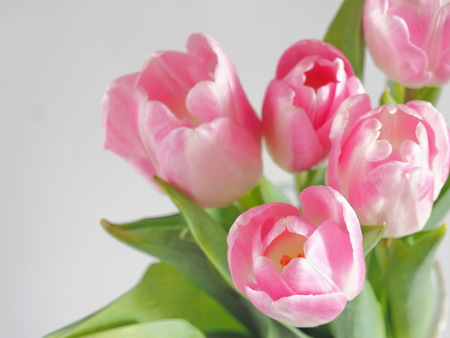 Photo pour Flower background, blur. Greeting card. Bouquet of pink tulips in a vase. Selective focus on the front.Top view. Copy space for your text. - image libre de droit