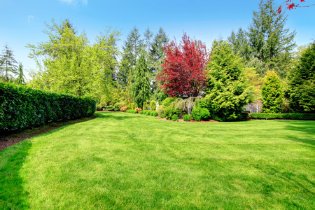 Beautiful green farm house backyard with green lawn, trees and trimmed hedges