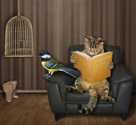 The beige cat in the black leather armchair is reading a book near the open empty bird cage in the living room. There is a tit next to him.