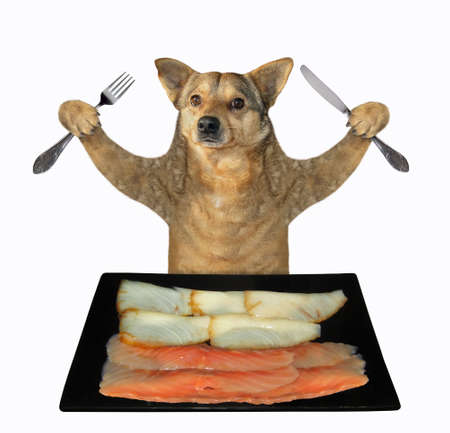 The beige dog with a knife and a fork is eating slices of smoked fish from a black square plate. White background. Isolated.