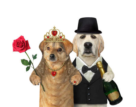 Photo pour A couple of dogs in love are having fun. White background. Isolated. - image libre de droit