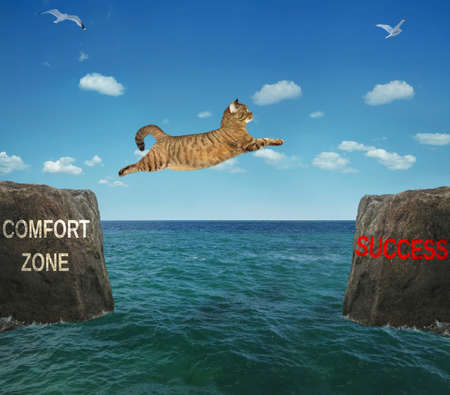 Photo for A brave cat jumps over the strait. Comfort zone - success. Positive motivation. - Royalty Free Image