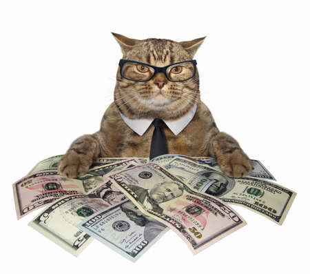 Photo for The smart cat in a tie and glasses holds american dollars. White background. - Royalty Free Image