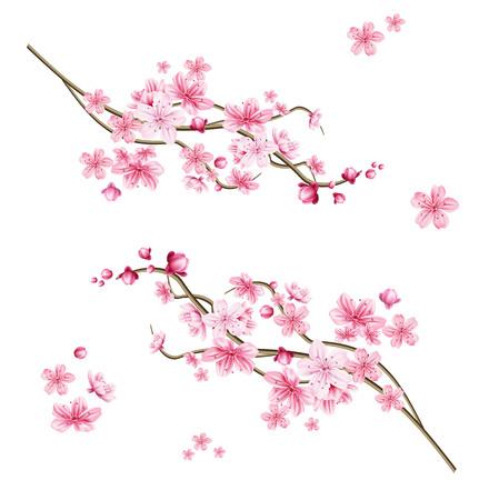 Illustration pour Realistic sakura tree branch. Elegant japanese symbol. Blooming plant twig with pink flower petals. Asian cultural symbol. Floral spring design decoration. Vector illustration. - image libre de droit