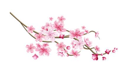 Illustration for Realistic sakura tree branch. Elegant japanese symbol. Blooming plant twig with pink flower petals. Asian cultural symbol. Floral spring design decoration. Vector illustration. - Royalty Free Image
