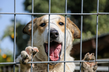 Closeup of a dog looking through the bars of a fance, outdoor