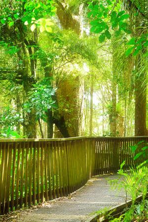 Photo pour Winding wooden footpath going through native New Zealand forest. - image libre de droit