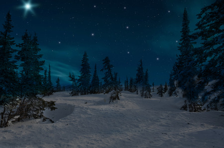 Photo for Night scene with snow-covered christmas trees in winter forest on the background of stars and sky - Royalty Free Image