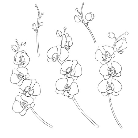 Set of isolated branches of orchids hand-drawn black outline. On a white background isolated. Hand drawn vector illustration.