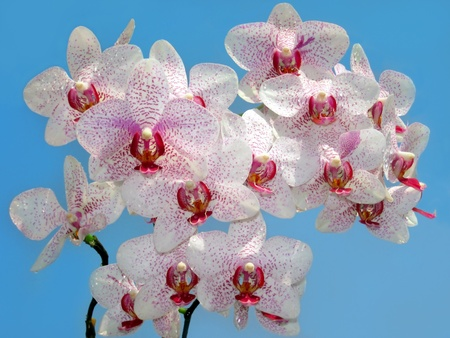 branch of purple and white orchid against the blue skyの写真素材