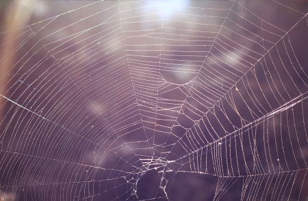 abstract background with spider web