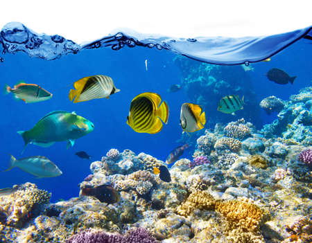 Foto de Coral and fish in the Red Sea Egypt - Imagen libre de derechos