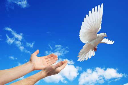 Foto de hands released into the blue sky to the sun a white dove - Imagen libre de derechos