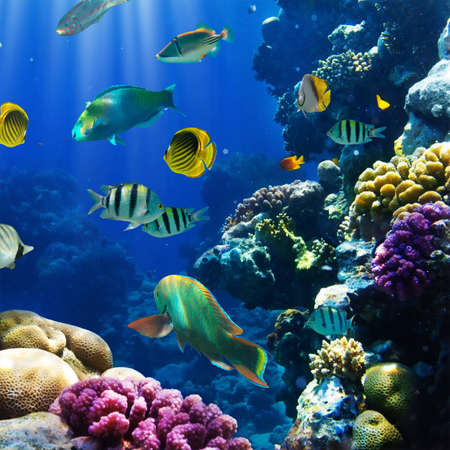 Foto de Photo of a tropical Fish on a coral reef - Imagen libre de derechos