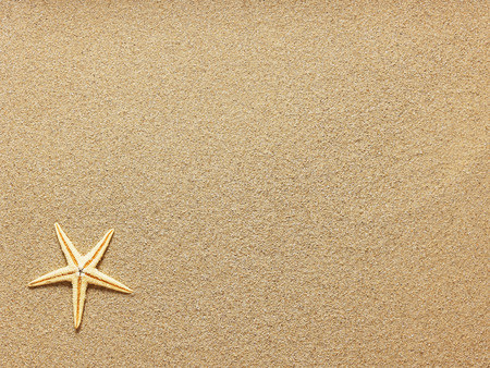 Foto de Starfish on Beach Sand. Close up - Imagen libre de derechos