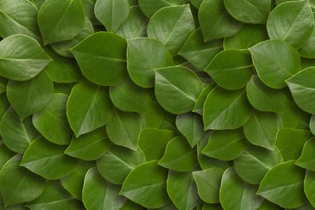 Photo pour Green leaves background. Close up - image libre de droit