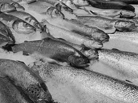 Photo pour A lot of fresh raw fish on store shelve with ice - image libre de droit