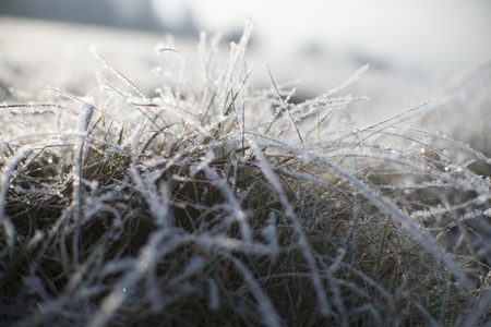 Snow on Frozen Grass