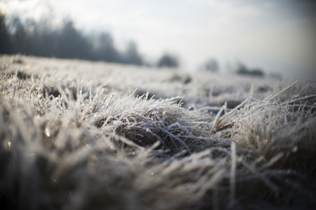 Snow on Frozen Grass
