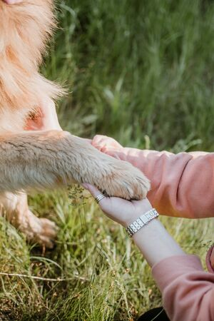 Pet love, dog is the best friend. German shepherd dog paws and human hand close up.