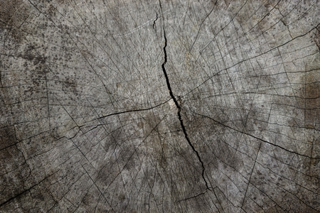 Photo pour Cracked wood textures, close up. - image libre de droit