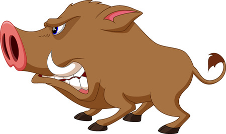 Wild boar cartoon angry