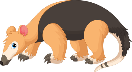 Illustration pour Vector illustration of Tamandua tetradactyla isolated on white background - image libre de droit