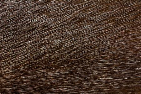 Dark fur mink. Fur texture.