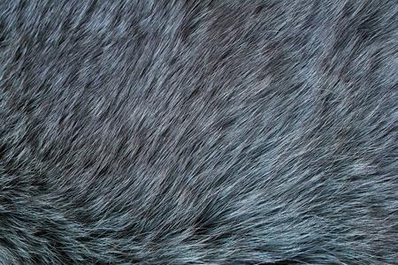 Fur arctic fox. Fur texture.