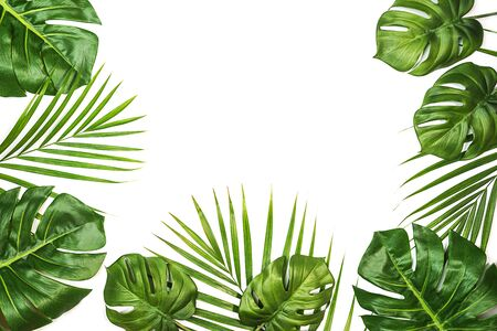 Photo for Tropical leaves Monstera and palm isolated, Swiss Cheese Plant, isolated on white background. Flat lay, top view. - Royalty Free Image