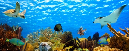 tropical underwater sea life