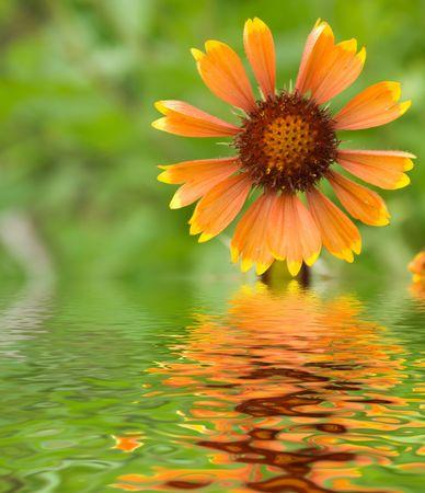 Flowers in a garden witn reflection