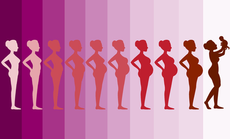 Illustration for Changes in a woman's body in pregnancy,Silhouette pregnancy stages, Vector illustrations - Royalty Free Image