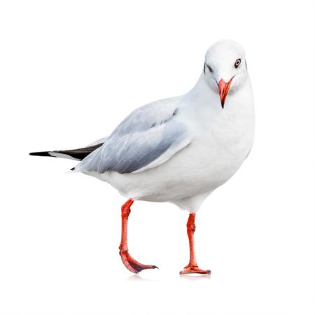 Foto de Seagull isolated on white background. White bird for your design. Wink emotion. - Imagen libre de derechos