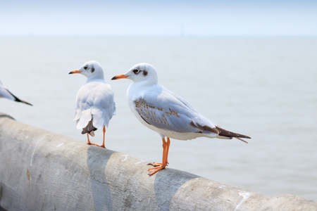 Photo for White seagull standing on the bridge in nature background. - Royalty Free Image
