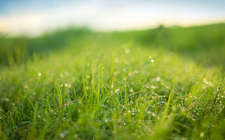 Photo pour Beautiful nature background. Fresh grass scene and dew in morning time. - image libre de droit
