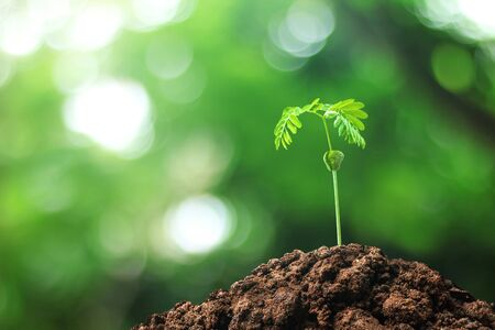 Photo pour Growing trees from seeds grown in the ground amidst the natural background. Sprouting green leaves tree in the concept of starting a new life and a beautiful environment and fresh air. - image libre de droit