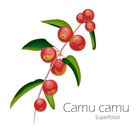 Illustration pour Illustration of camu camu. Fresh fruit background. Vector illustration for your design. Myrciaria dubia. - image libre de droit
