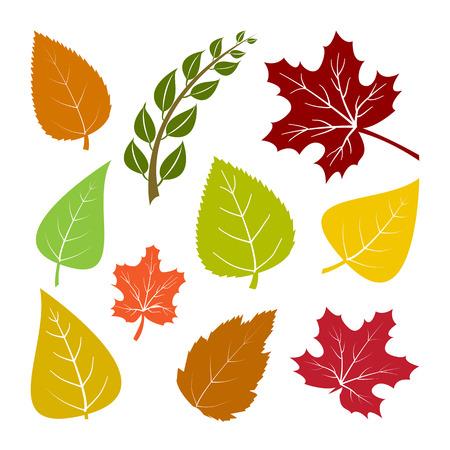 Colorful set autumn leaves. Vector illustration