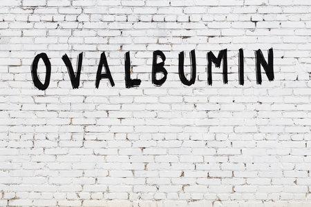 Photo pour White brick wall with inscription ovalbumin handwritten with black paint - image libre de droit