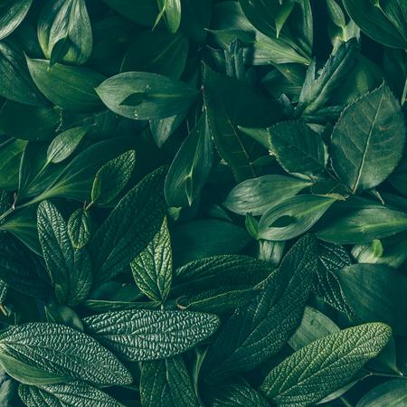 Foto de Creative layout made of green leaves. Flat lay. Nature background - Imagen libre de derechos